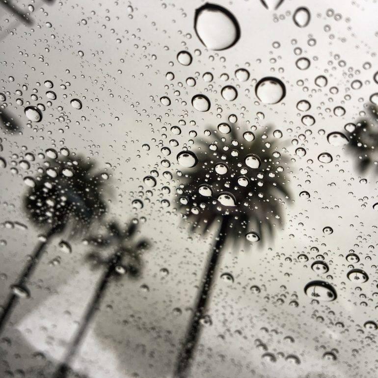 la-me-scm-raindrops-palm-trees-20160106